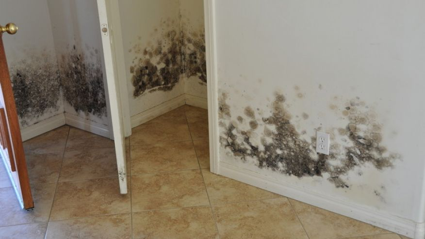 mold growing on walls of household.